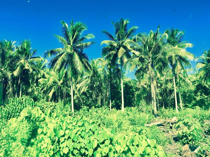 Samoa djungel royaltyfri bild