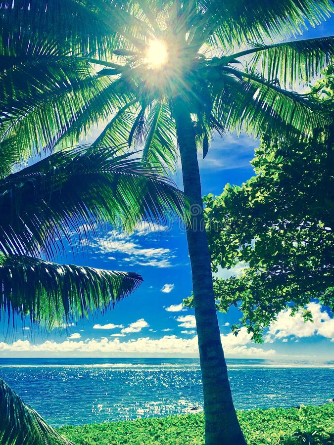 Samoa hav & gömma i handflatan arkivfoton