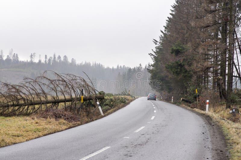 Samochód bezpiecznie ciągły na drodze rozjaśniał od spadać drzewa Spadać drzewo przez drogę po silnego wiatru Droga blokująca obo zdjęcie royalty free