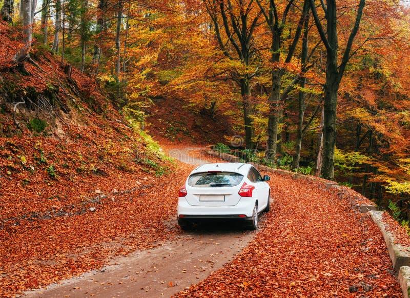 Samochód na lasowej ścieżce Jesieni aleja obraz royalty free