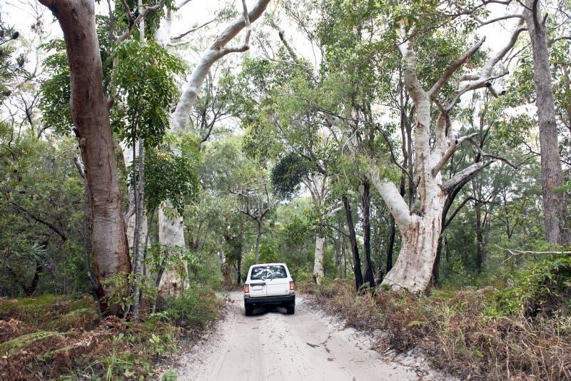 Samochód w dżungla lasach Fraser wyspa zdjęcie stock