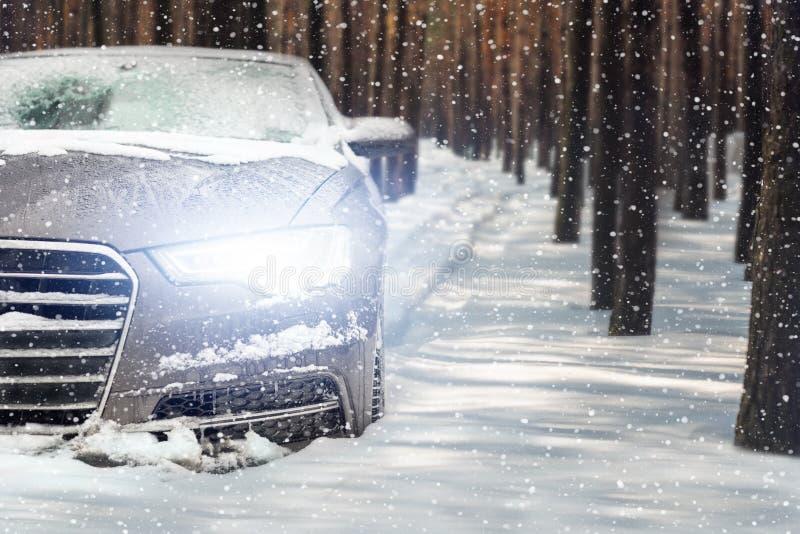 Samochodowy jeżdżenie przez sosnowego lasu opuszcza ślada w śniegu Ciężki zima opad śniegu miecielica śnieżyca Zima wakacje, podr obraz royalty free