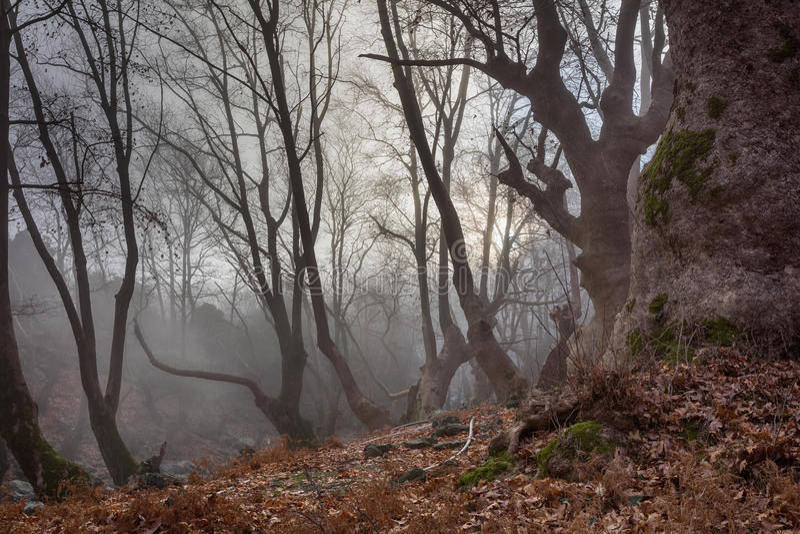 Samothrace. Dark misty forest at Samothrace island royalty free stock photos