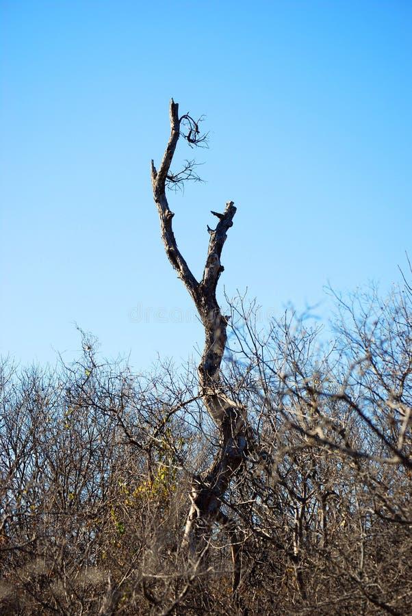Samotna gałąź w Bramble lesie zdjęcie royalty free