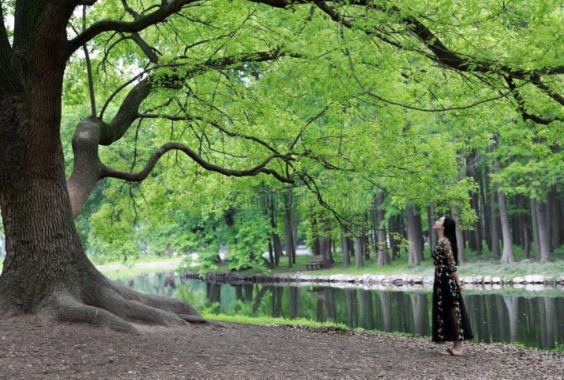 Samotna kobieta pod du?ym okwitni?cia drzewem zdjęcia royalty free