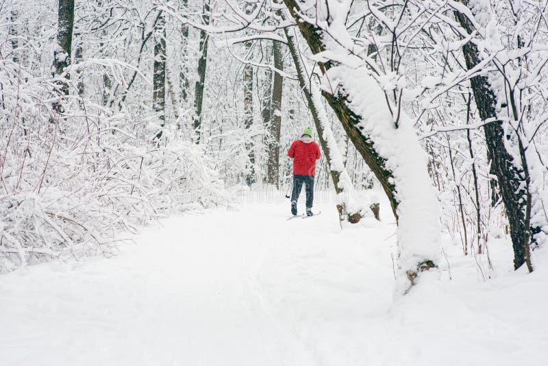 Samotna narciarka w drewnach obrazy stock