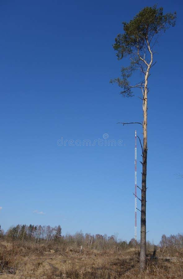 Samotna wysoka sosna przeciw Olsztyńskiemu radio masztowi w tle obrazy stock
