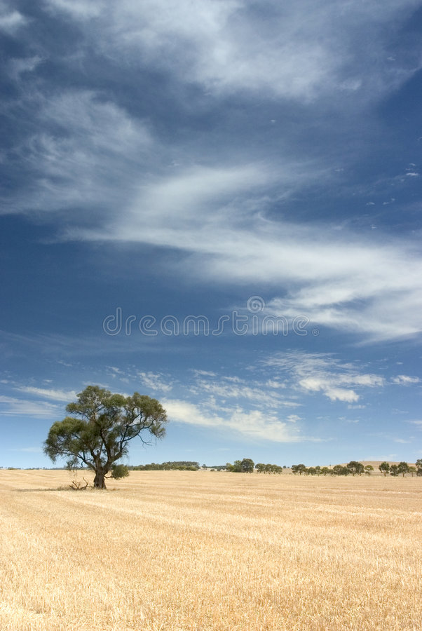 Download Samotne drzewo obraz stock. Obraz złożonej z farm, odludzie - 144603