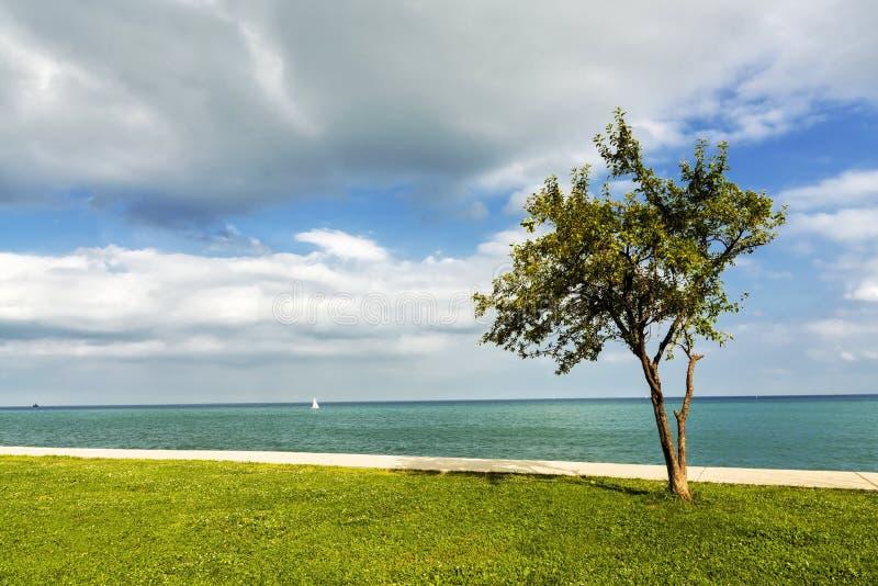 Download Samotne drzewo zdjęcie stock. Obraz złożonej z ślad, analfabetyzm - 57674008