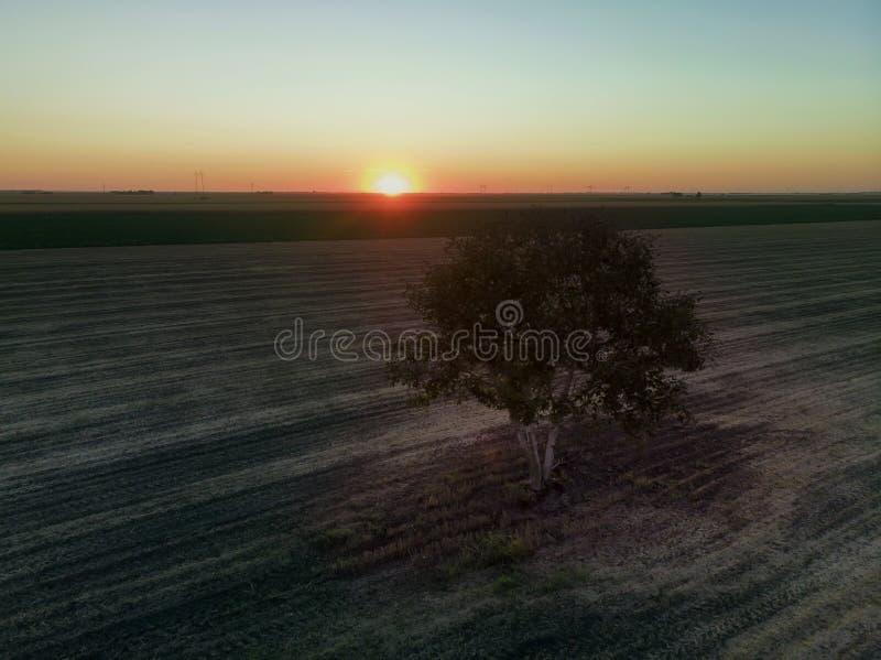Samotne drzewo na polach rolniczych w zachodzie słońca obrazy royalty free