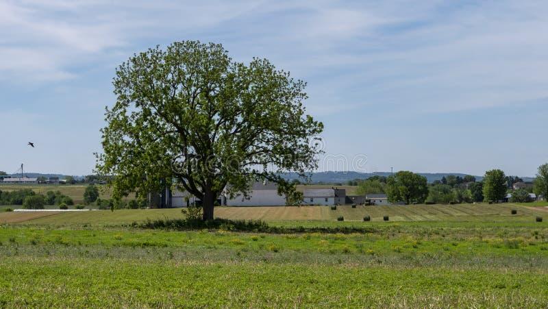 Samotne drzewo na terenie Amisha obraz stock
