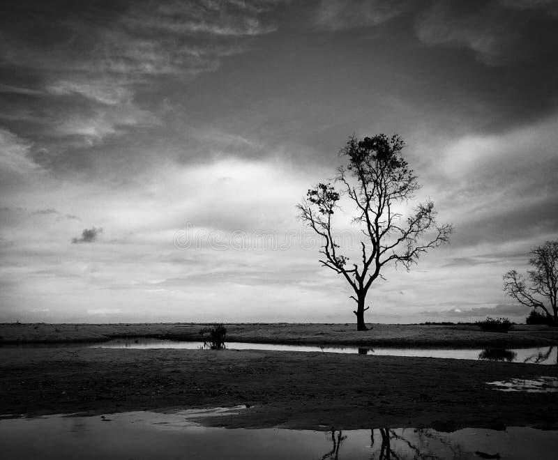 Samotni drzewa zdjęcia stock
