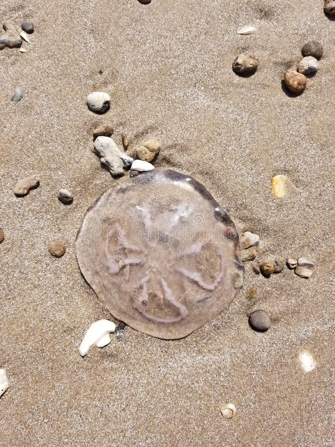 Samotni jellyfish zdjęcia royalty free