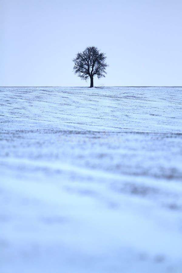 Download Samotnie zdjęcie stock. Obraz złożonej z rolnictwo, zima - 28938238