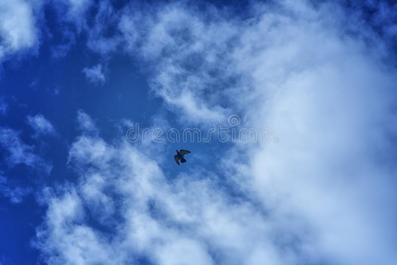 Samotnie na niebieskim niebie obrazy stock