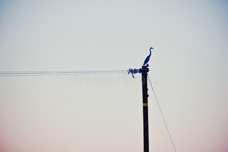 Samotny żuraw obraz stock