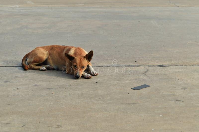 Samotny bezdomny pies kłaść puszek w samochodowym parking w mieście fotografia stock
