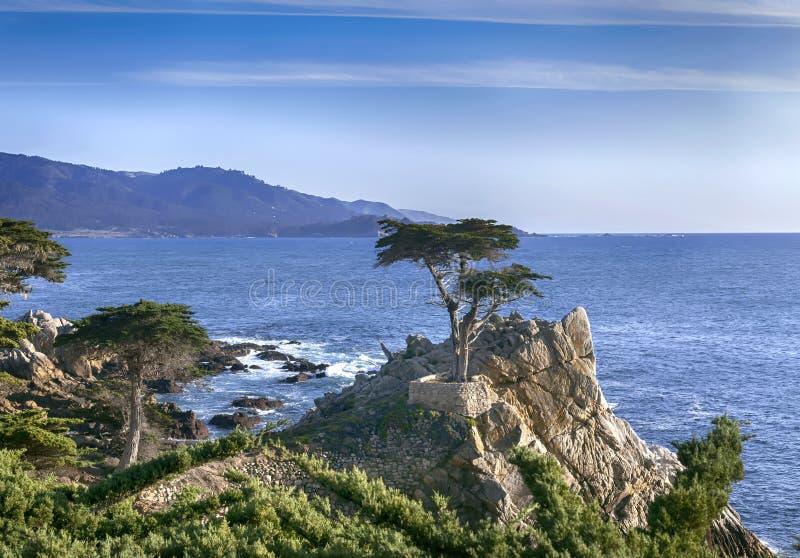 Samotny cyprys - 17 mil przejażdżka obraz stock