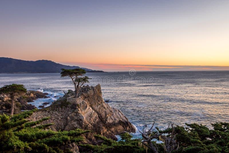 Samotny Cyprysowy drzewny widok przy zmierzchem wzdłuż sławnej 17 mil przejażdżki - Monterey, Kalifornia, usa obraz royalty free