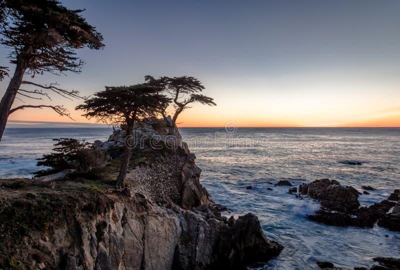 Samotny Cyprysowy drzewny widok przy zmierzchem wzdłuż sławnej 17 mil przejażdżki - Monterey, Kalifornia, usa zdjęcie stock