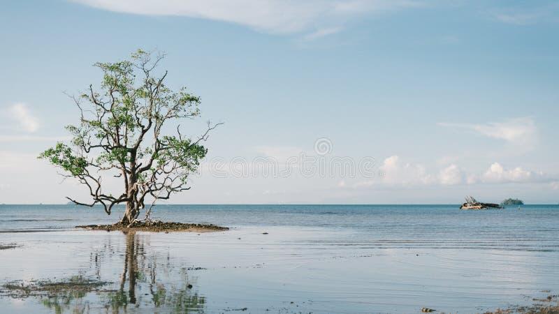 samotny człowiek obrazy royalty free