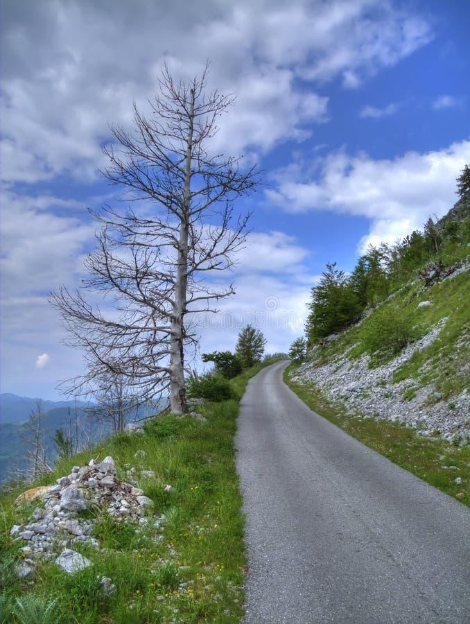 samotny drogowy drzewo zdjęcie royalty free