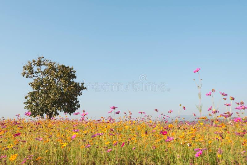 Samotny drzewa i kosmosu kwiatu pole na naturalnym niebieskim niebie Dobry d fotografia stock
