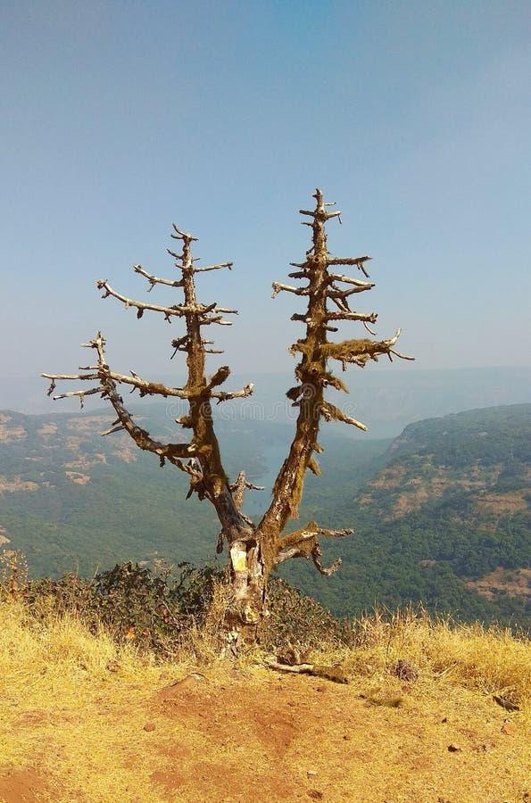 Samotny drzewny nieboszczyk obrazy royalty free