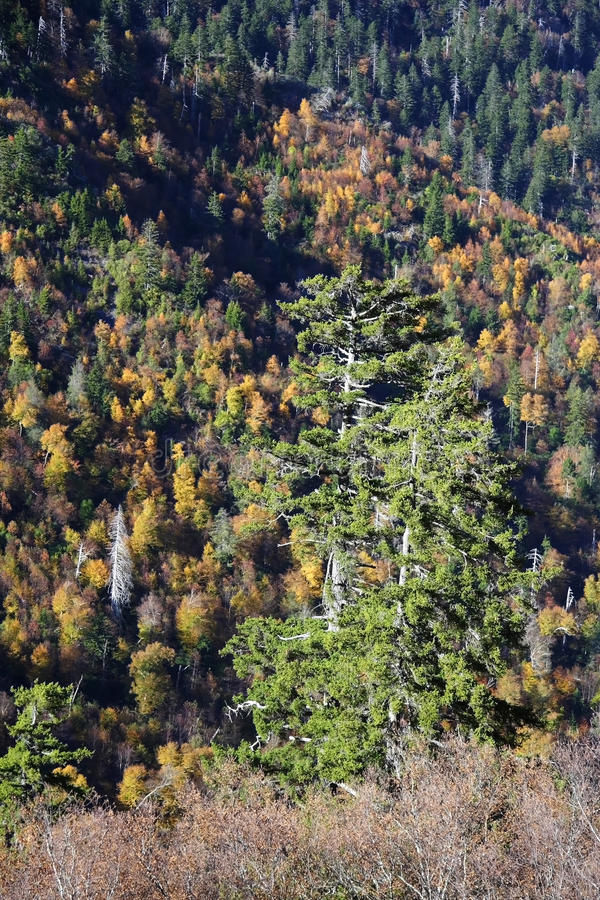 samotny drzewo obraz royalty free