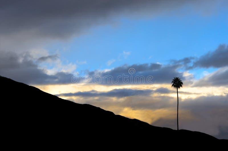samotny drzewo zdjęcia stock