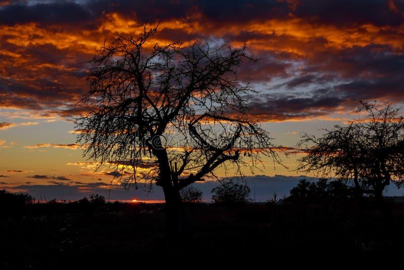 Samotny drzewo na łące przy zmierzchem z słońcem i mgłą zdjęcia royalty free