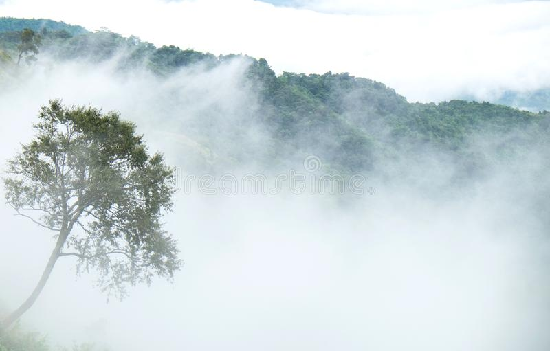 Samotny drzewo na górach zakrywać z mgłą zdjęcie stock