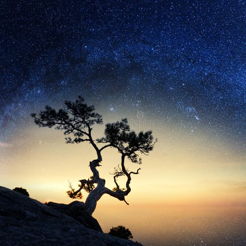Samotny drzewo na krawędzi falezy obraz royalty free