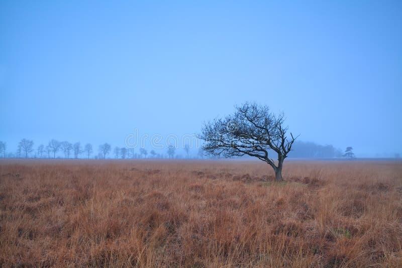 Samotny drzewo na mglistym bagnie obrazy stock