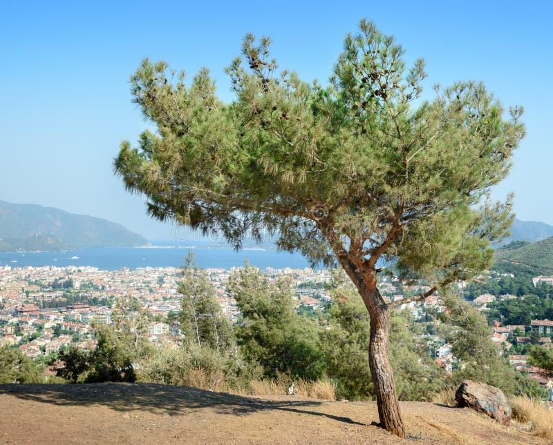 Samotny drzewo na poboczu zdjęcia stock
