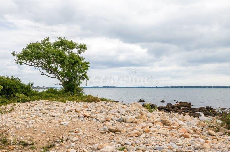 Samotny drzewo na skalistej plaży obrazy royalty free
