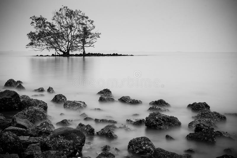 Samotny drzewo na wyspie fotografia stock
