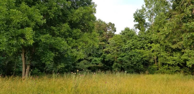 Samotny drzewo Północny Gruzja, McDaniel gospodarstwo rolne w Duluth w nasłonecznionej łące - zdjęcia royalty free