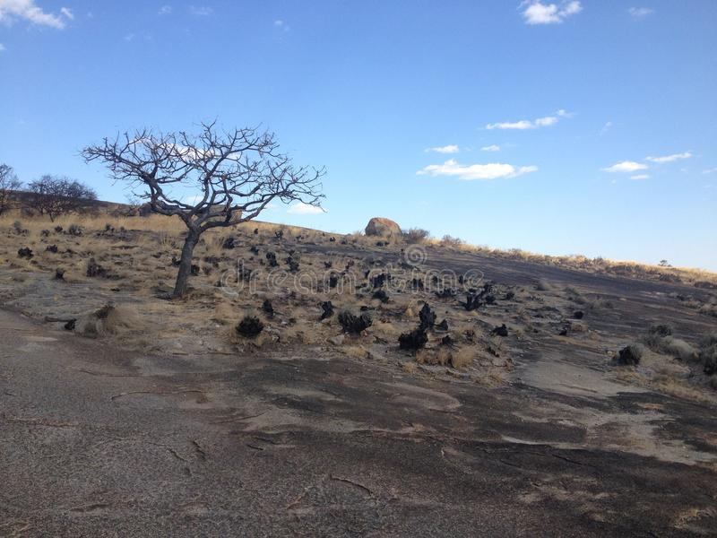 Samotny drzewo w Matobo parku narodowym, Zimbabwe fotografia stock