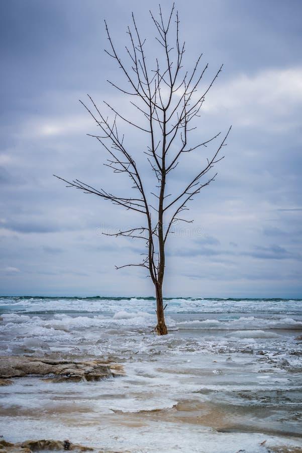 Samotny drzewo w Zamarzniętej kipieli fotografia royalty free