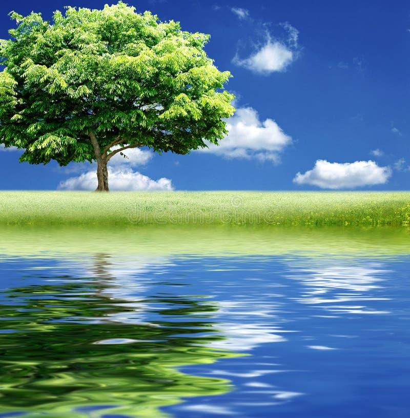 Samotny drzewo z wodnym odbiciem zdjęcie stock