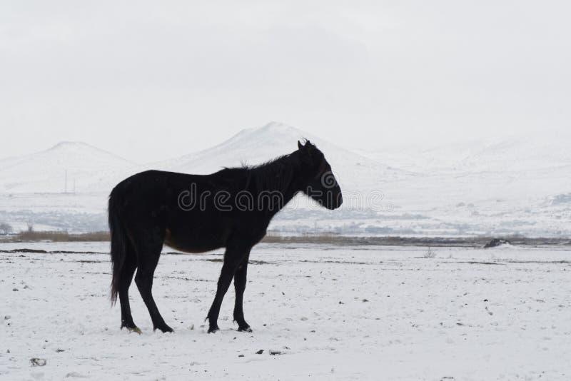 Samotny koń fotografia royalty free
