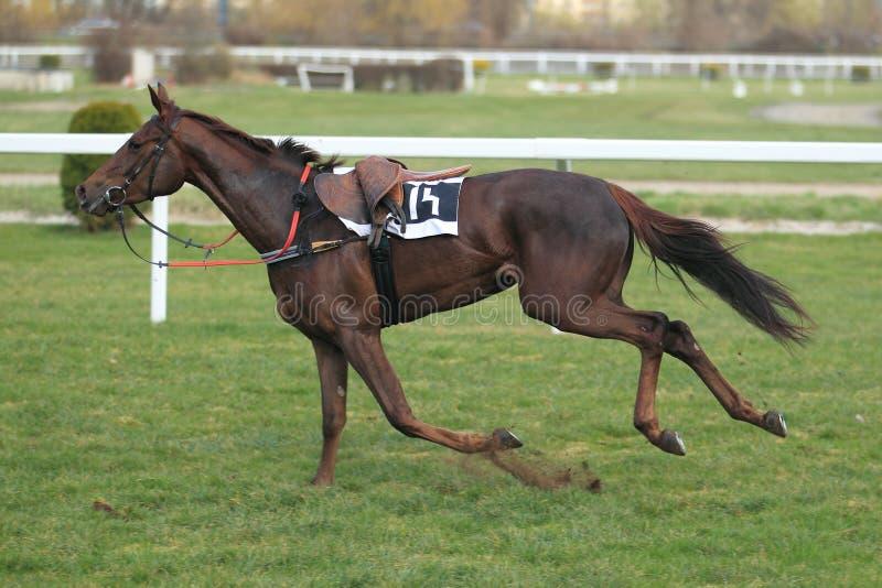 Samotny koń w wyścigi konny w Praga zdjęcie royalty free