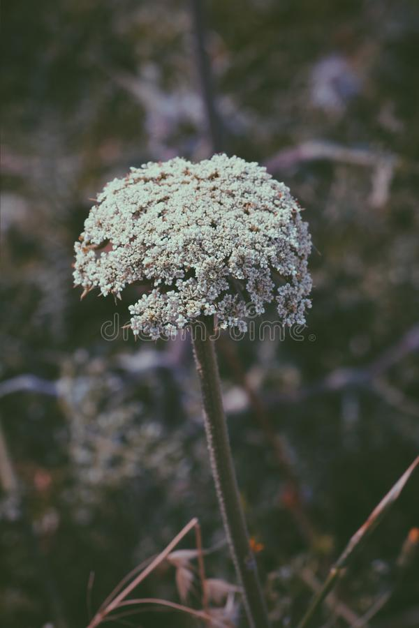 Samotny kwiat zdjęcie royalty free