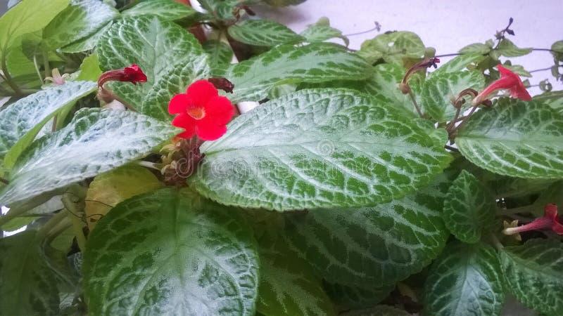 samotny kwiatek zdjęcia stock