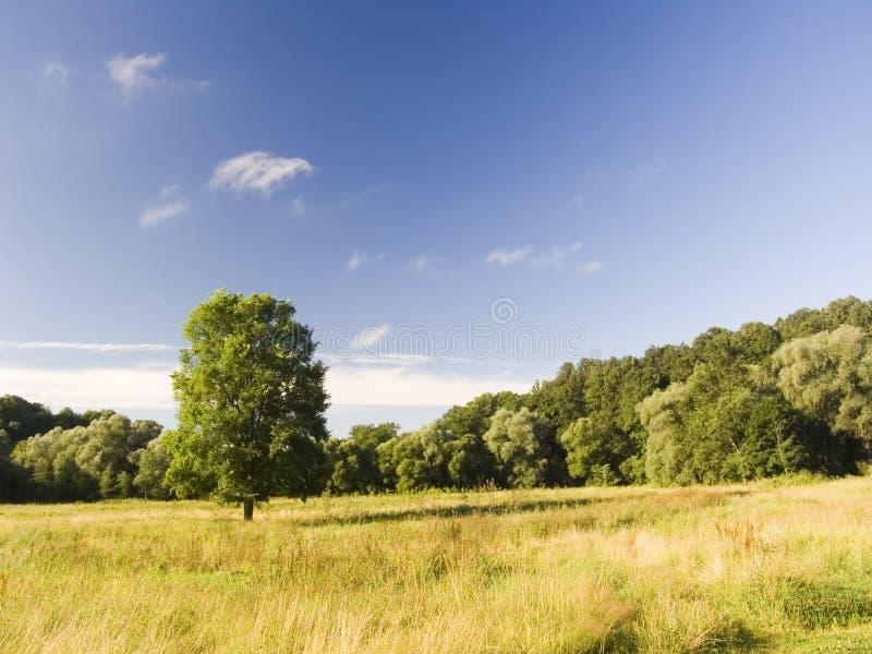 samotny meadow drzewo obraz stock