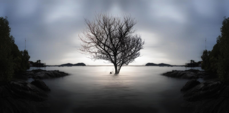 Samotny nieżywy drzewo i stronniczo zanurzający w morzu na zmierzchu , obrazy stock