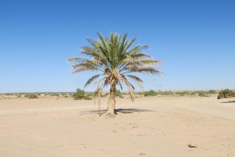 samotny palma obrazy royalty free