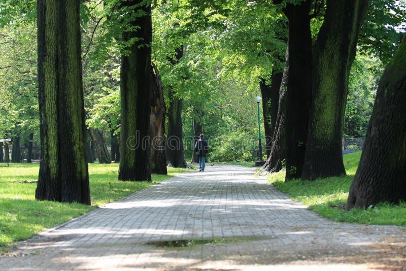 samotny parkowy odprowadzenie fotografia stock