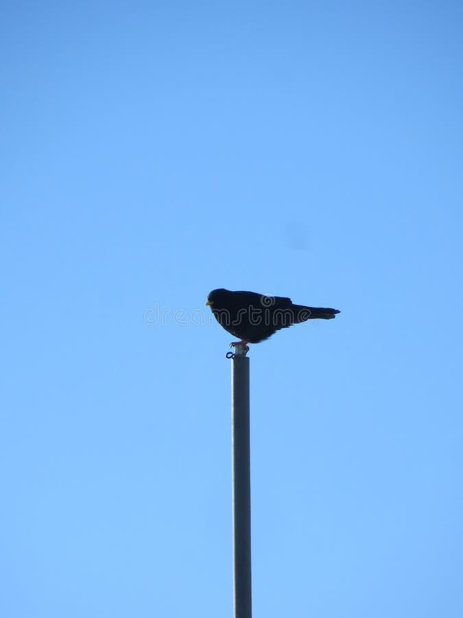 Samotny ptak zdjęcie stock